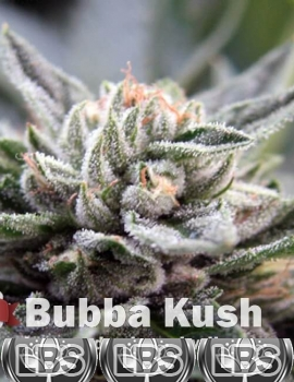Bubba Kush seeds for sale