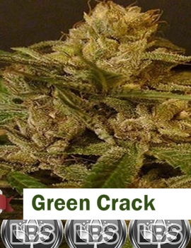Green Crack seeds for sale