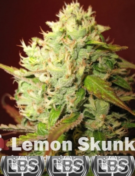 Lemon Skunk Seeds