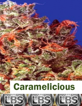Caramelicious seeds for sale