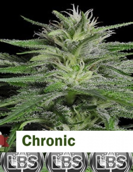 Chronic seeds for sale