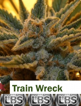 Train Wreck Seeds